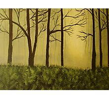 The Woods Photographic Print