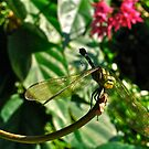 Dragonfly magic by Ali Brown