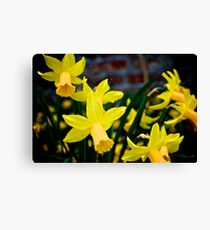 The Garden of England in Bloom Canvas Print