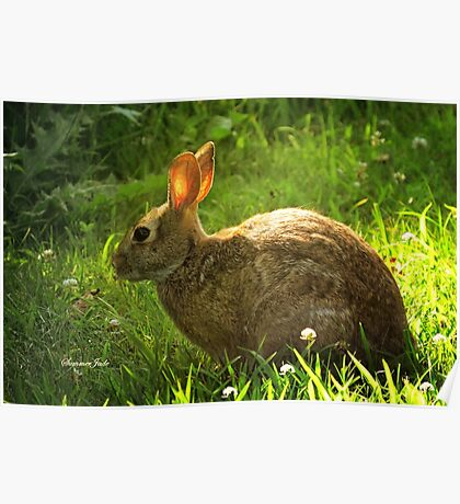 Wild Bunny ~ In a Patch of Clover Poster