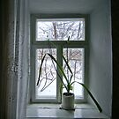 Window by Kateryna Naumova