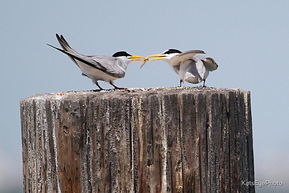 Least Tern Feeding Time by KatsEyePhoto