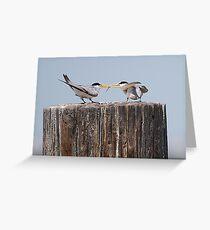 Least Tern Feeding Time Greeting Card
