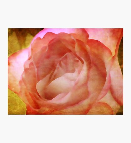 A painted rose Fotodruck