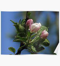 Blossom Delight of Spring! Poster
