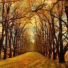 New England Autumn by Kitsmumma