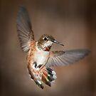 Humming Bird by toby snelgrove  IPA