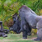 Family discussion by zzsuzsa