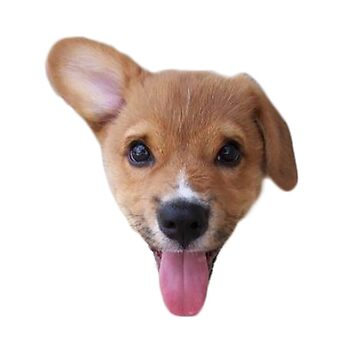 Adorable Puppy With His Tongue Out de KimzeyandAlex