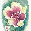 Flower of Miltonia by acquart