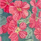 Nasturtium flowers by acquart