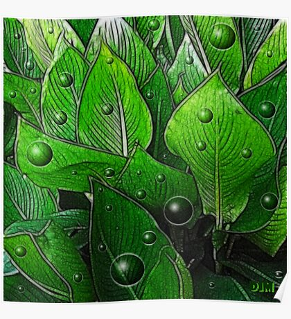 Canna Leaves Poster