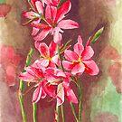 Schiztostylis flowers by acquart