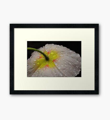 Poppydrops Framed Print