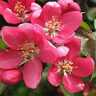 HELLO FLOWER by artwin1