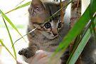 Jimmie Maui Kitten by Jo Nijenhuis