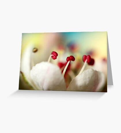 Candy Rainbow Greeting Card