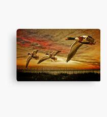Shelduck Sunset Canvas Print