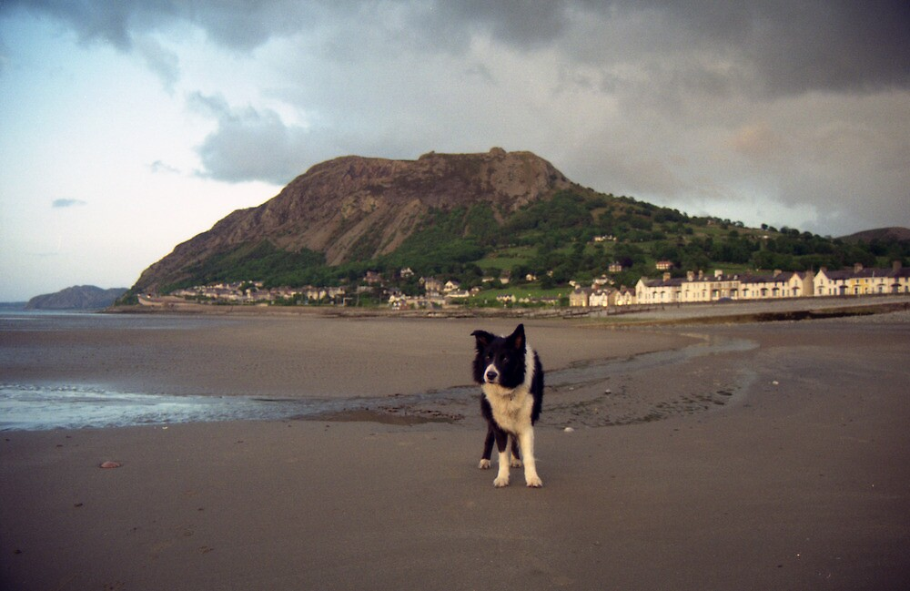 Evening at the beach with Indy! by Michael Haslam