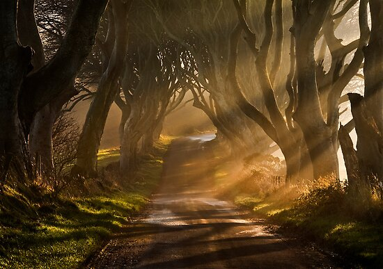 The Dark Hedges by GaryMcParland