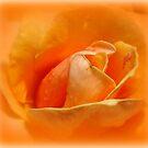 Rose.....Written On My Heart by Kathy Bucari