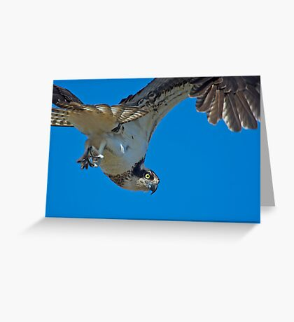 Close Encounter of the Avian Kind  Greeting Card