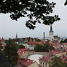At the top of Tallinn by Natasha O'Connor