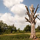 Ex Tree...Still Standing! by funkybunch