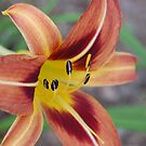 Day Lily by rd Erickson