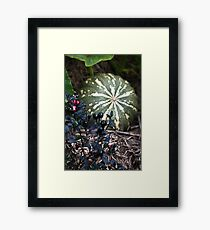 In the Pumpkin Patch - 3 Framed Print