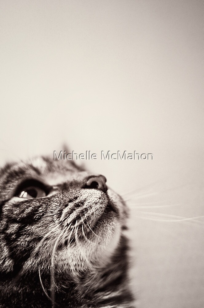 looking up.. by Michelle McMahon