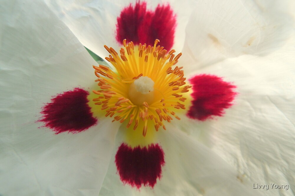 Tissue flower. by Livvy Young