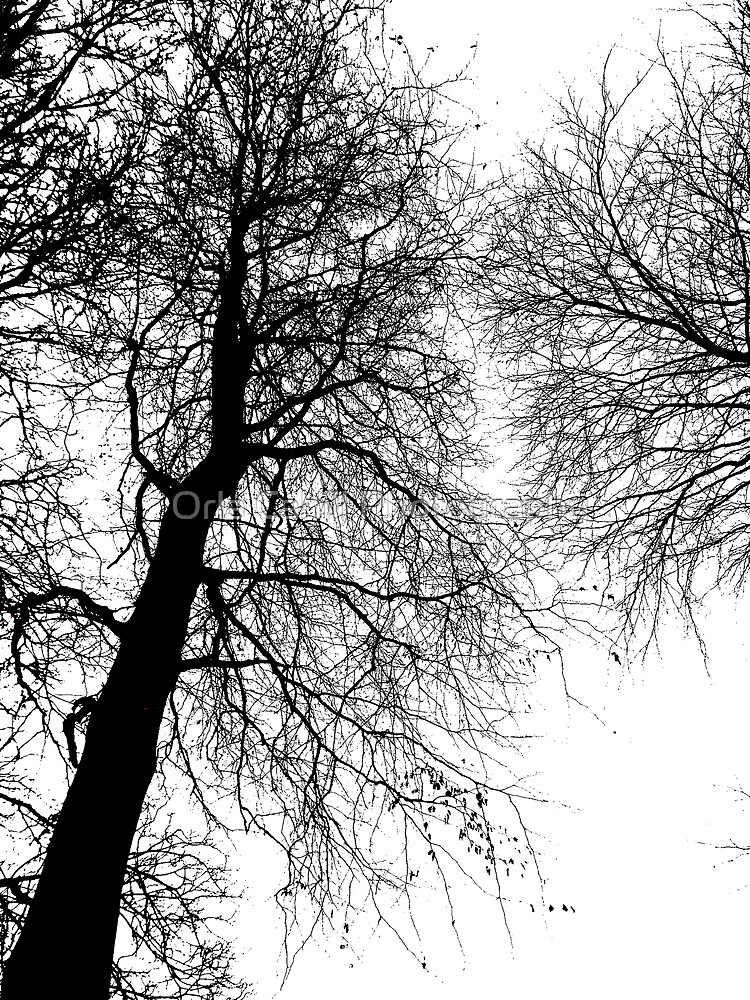 Tree Graphic No.2 by Orla Cahill Photography