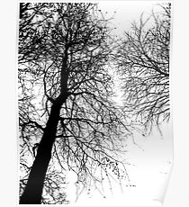 Tree Graphic No.2 Poster