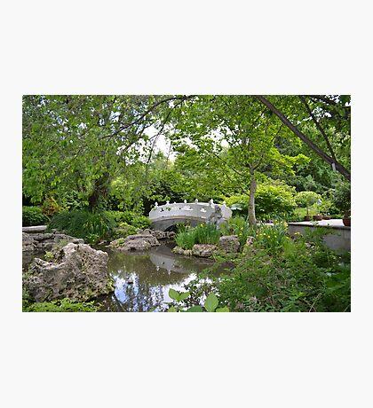 Chinese Garden and Bridge Photographic Print