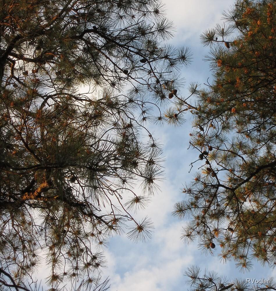 Pine Lace by RVogler