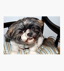 Chewie's pet dog Photographic Print