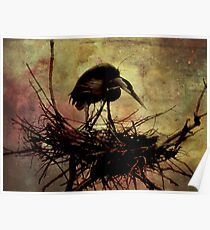 Dark Day on Heron Island Poster