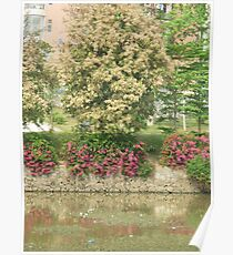 majestic trees with attractive white blossoms Poster