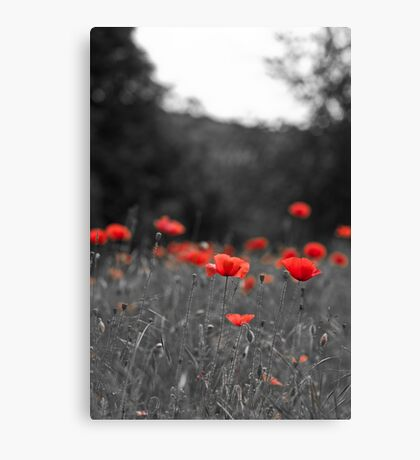 Selective Red Canvas Print