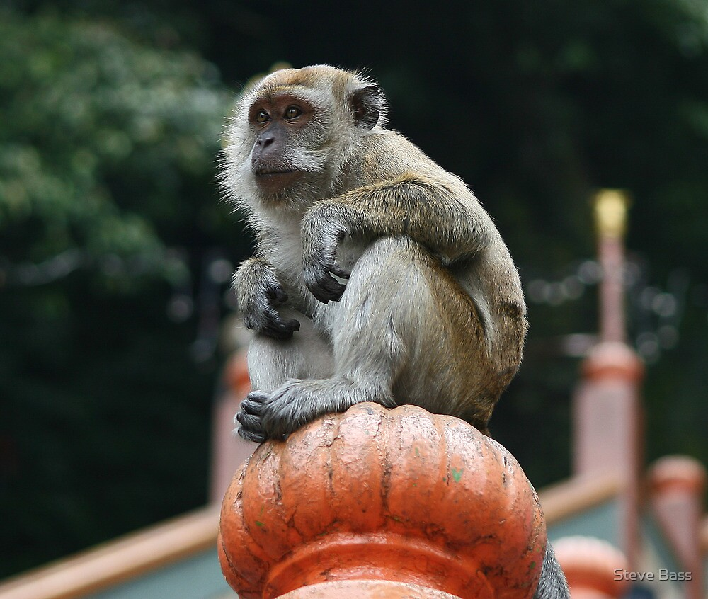 Monkey Business, Batu Caves Malaysia by Steve Bass