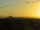South to North  (best viewed larger) by Brenda Dahl