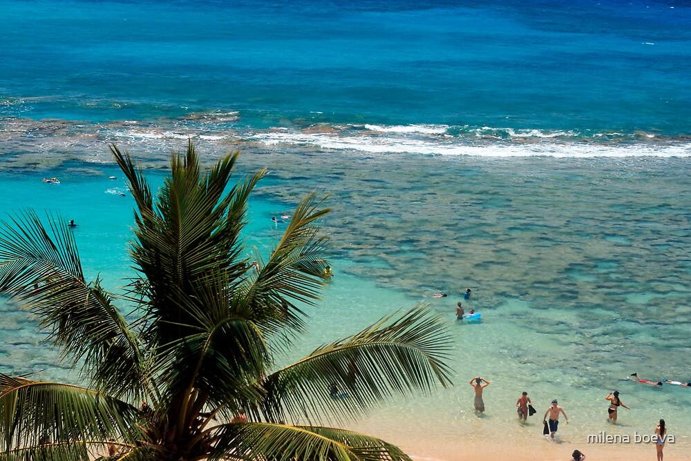 hawaii by milena boeva