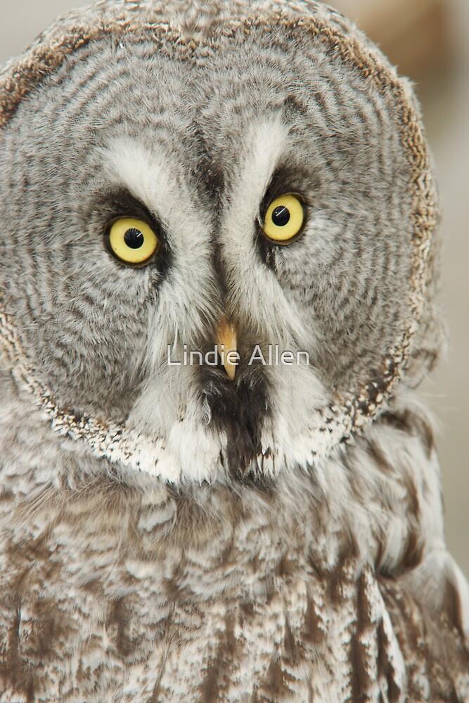 Great Grey Owl by Lindie Allen