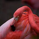Definitely Pink by zzsuzsa
