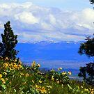 Montana Nature Calendar by amontanaview