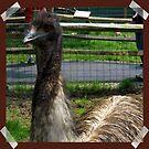 Emu At the Petting Zoo?! by teresa731