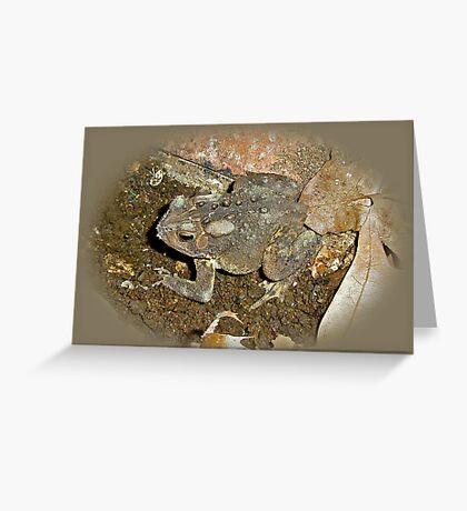 Common Toad - Bufo americanus Greeting Card
