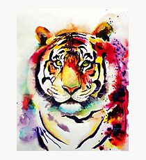 The Big Tiger Photographic Print