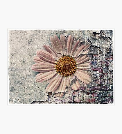 Another Decayed Flower! Photographic Print